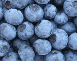 Selehurst Garden Blueberries / Local Food Sussex