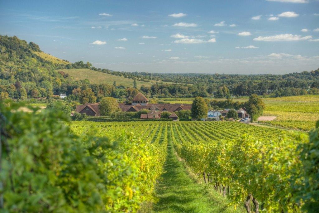 Denbies Wine Estate in Dorking, Surrey