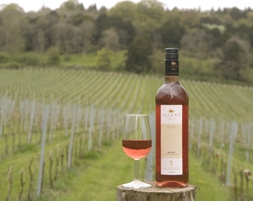 Bottle of organic wine at Albury Vineyard, Local Food Surrey