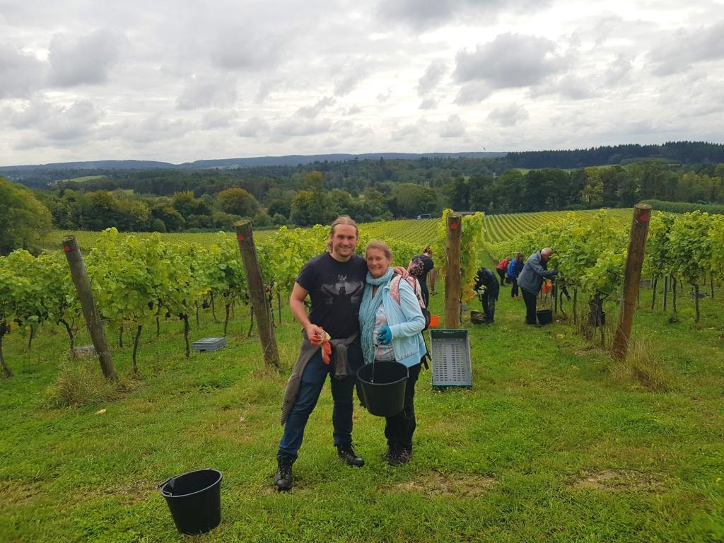 Local_Food_Britain_joins_Albury_Organic_Vineyard_for_their_2019_grape_harvest.jpg