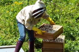 Glebe House honey bees producing local honey, Godstone | Local Food Surrey