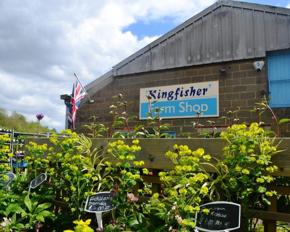 Kingfisher Farm Shop in Abinger Hammer in
