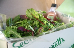 Secretts' leaves | Local Food Surrey