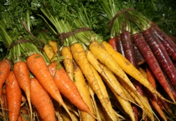 Carrots from Secretts | Local Food Surrey