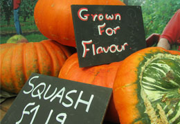 Pumpkins grown by London Food Producers