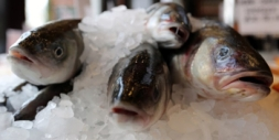 Sea bass in a bag with fresh herb citrus sauce