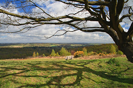 Crowborough's view of the Weald - Local Food Sussex