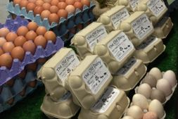 Noel's Farm Shop hen's eggs and turkey eggs