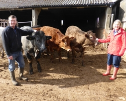 Erica and Tim Bargman with their organic beef cattle at Rudgwick | Local Food Sussex