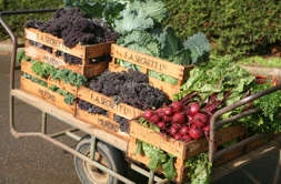 Cart of Secretts' vegetables | Local Food Surrey