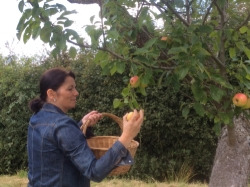 Paula Briscoe uses locally-picked apples in her Briscoe's Jellies