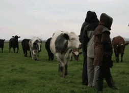 Organised Walks passed Three Harbours Beef Cattle, Local Food Sussex