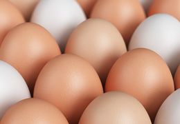 Free Range Eggs from Hampshire Farms